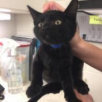 Adopt A Pet :: Octavius - Auburn, AL