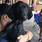 Adopt A Pet :: Big Sur Sinead
