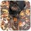 Photo 2 - Shepherd (Unknown Type) Mix Puppy for adoption in Phoenix, Oregon - Trixie