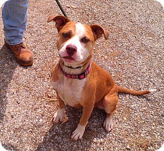 Boxer Mix Dog for adoption in Metamora, Indiana - Desdemona