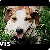 Adopt A Pet :: Elvis - Vancleave, MS