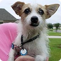 Adopt A Pet :: Eva - Baton Rouge, LA