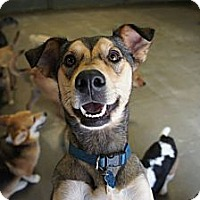Adopt A Pet :: Lacie - PENDING, in ME - kennebunkport, ME