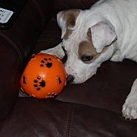 Adopt A Pet :: Beau - Earl, NC