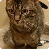 Adopt A Pet :: Luella - McDonough, GA