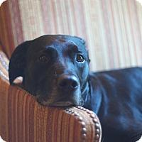 Adopt A Pet :: Jetstream - Evergreen, CO