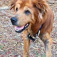 Adopt A Pet :: Kellin - Tampa, FL