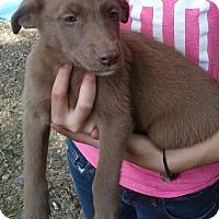Adopt A Pet :: Jewell - Burlington, VT