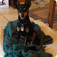 Adopt A Pet :: Emmi - Hazelwood, MO