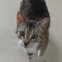 Adopt A Pet :: Carrie - Monroe, WI