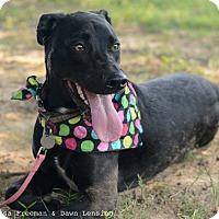 Adopt A Pet :: Savanah - Muldrow, OK