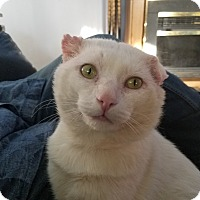 Adopt A Pet :: Louis - Livonia, MI