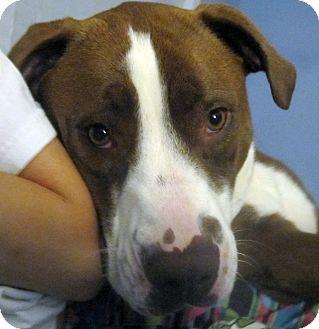 Hound (Unknown Type) Mix Dog for adoption in Marietta, Georgia - Kippy