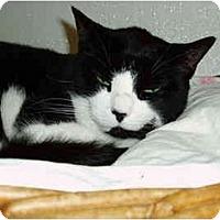 Adopt A Pet :: Cindy - Pascoag, RI