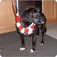 Adopt A Pet :: Candi - Clayton, OH