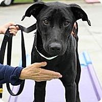 Adopt A Pet :: Charley - Cumming, GA