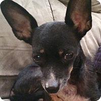 Adopt A Pet :: Frannie - Edmond, OK