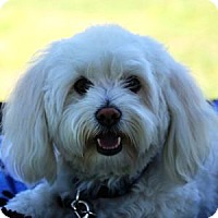 Adopt A Pet :: Milo - La Costa, CA