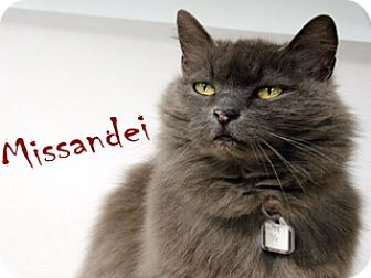 Domestic Longhair Cat for adoption in Hamilton, Montana - Missandei