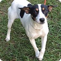 Adopt A Pet :: Fallon - Orlando, FL