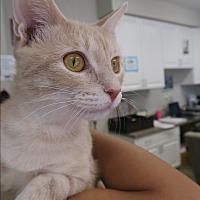 Adopt A Pet :: Mama Cat - Orlando, FL