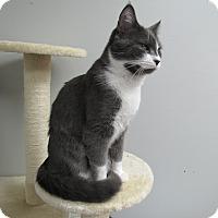 Adopt A Pet :: Buddy - Norwich, NY