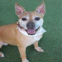 Adopt A Pet :: AUGUSTA - Los Angeles, CA