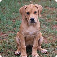 Adopt A Pet :: Jada - Monroe, GA