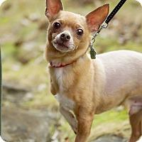 Adopt A Pet :: Elliot - Rigaud, QC