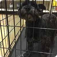 Adopt A Pet :: Sofia - Gainesville, FL