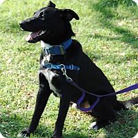 Adopt A Pet :: DJ - Marble Falls, TX