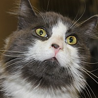 Adopt A Pet :: ROSEWOOD - Clayton, NJ