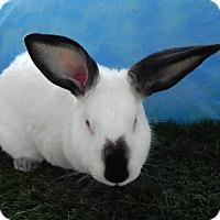 Adopt A Pet :: Jessica - Pflugerville, TX