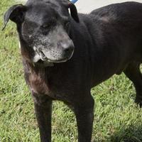Adopt A Pet :: Socrates - Martinsville, VA