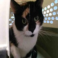 Adopt A Pet :: BUTTERCUP - Canfield, OH