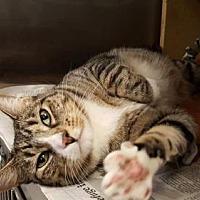 Adopt A Pet :: Sally Ann - Missouri City, TX