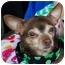 Photo 1 - Chihuahua Dog for adoption in White Settlement, Texas - Parnella AKA Ma