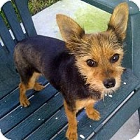 Adopt A Pet :: Lila - Tampa, FL