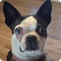 Adopt A Pet :: Virginia - Jackson, TN