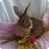 Adopt A Pet :: Diamond - Williston, FL