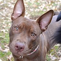 Adopt A Pet :: Mayflower - Reisterstown, MD