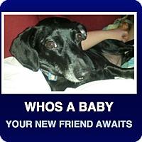 Adopt A Pet :: Mira - Morrisville, PA