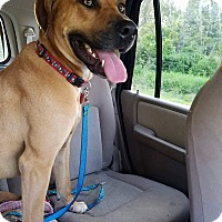 Adopt A Pet :: Andy - Charlestown, RI