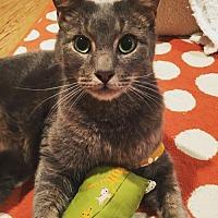 Adopt A Pet :: Percy - Herndon, VA