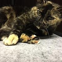 Adopt A Pet :: Ember - Raleigh, NC