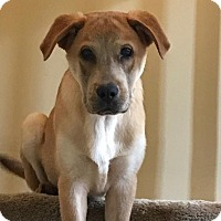 Adopt A Pet :: Chance - GREENLAWN, NY