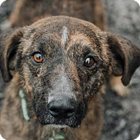 Adopt A Pet :: Axel - Lockport, NY