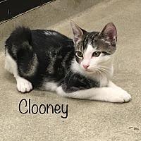 Adopt A Pet :: Clooney - El Dorado Hills, CA