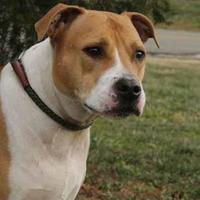 Adopt A Pet :: Chloe - Westampton, NJ