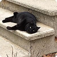Adopt A Pet :: Salem - Lunenburg, MA